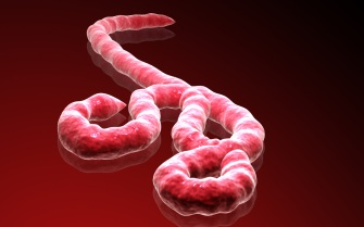 1408167784_ebola